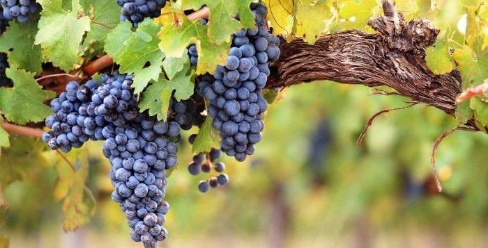 Virginia's Wines are Mighty Fine