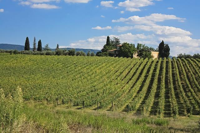 Ciliegiolo, Colorino, Mammolo—Tuscany's Forgotten Grapes